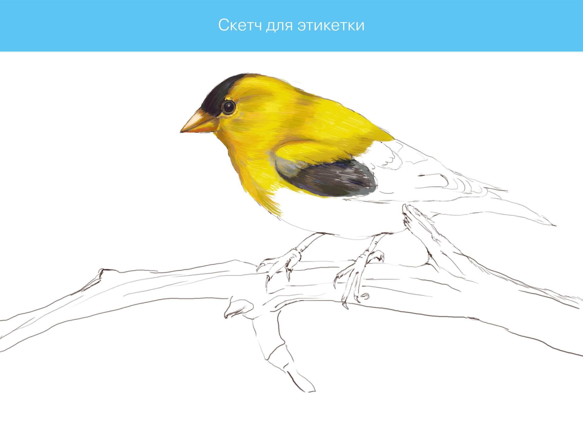 Prokochuk_Irina_Illustration_bird_1