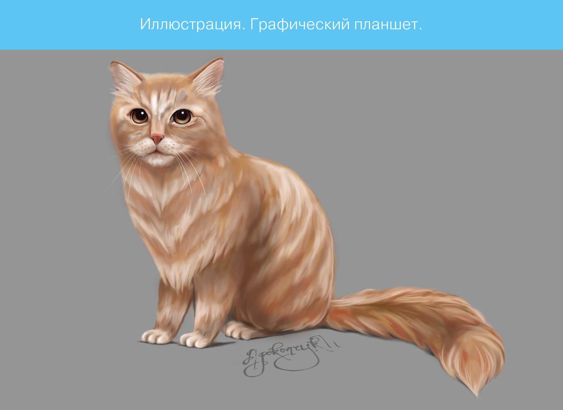 Prokochuk_Irina_Illustration_cat_1