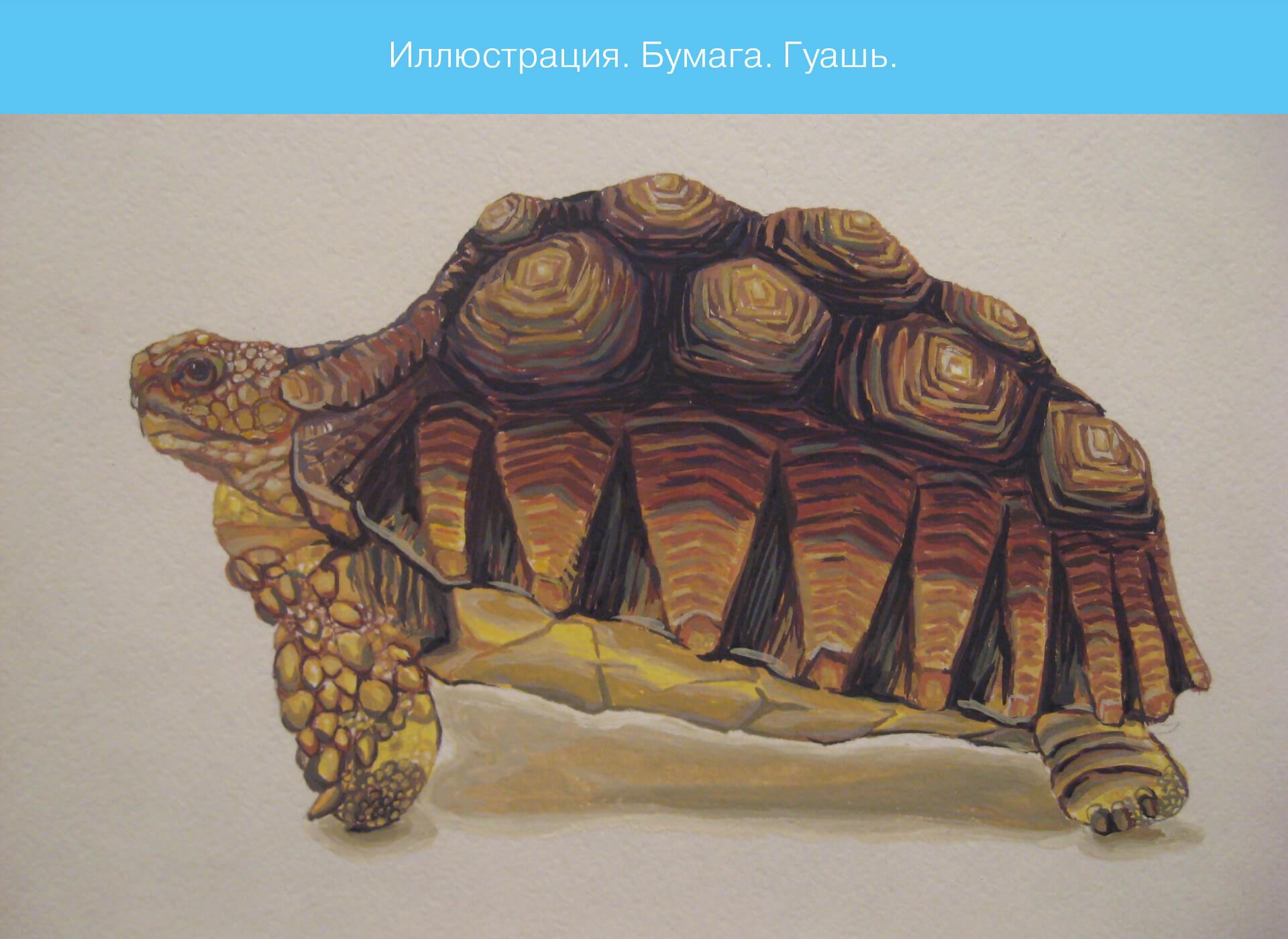 Prokochuk_Irina_Illustration_turtle_1